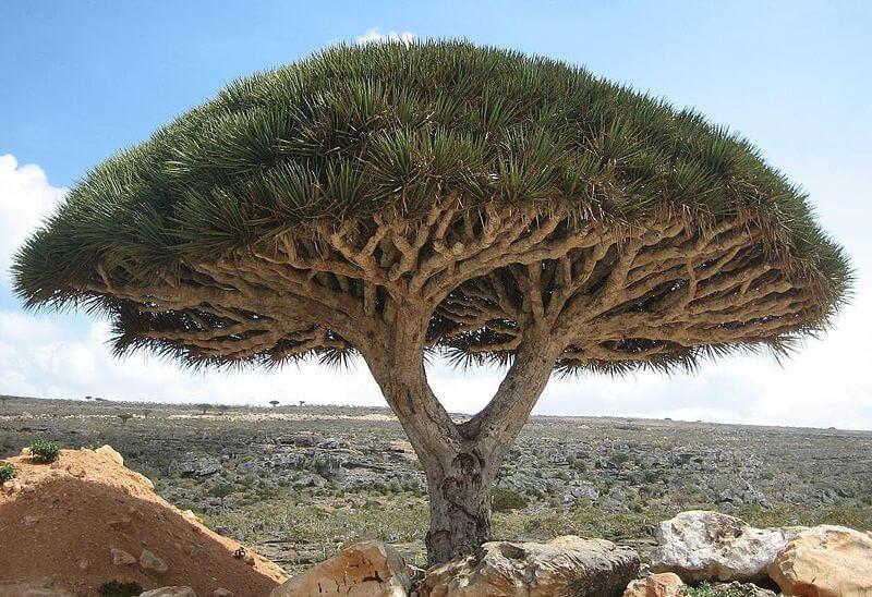 endogeniczne drzewo