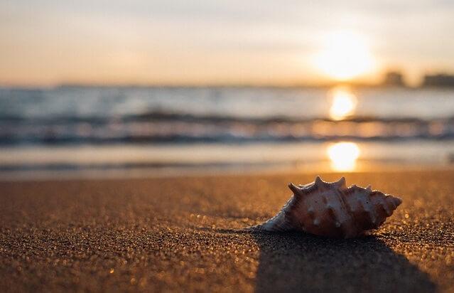 Muszla leżąca na słonecznej plaży