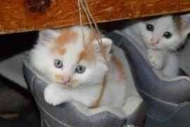 Jak namówić rodziców na kota w domu?
