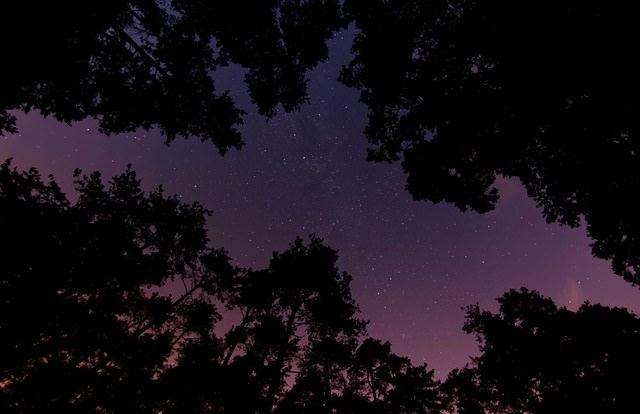 Gwieździste niebo nad drzewami