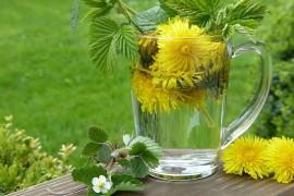 Jak się leczyć ziołami? Wszystko co musisz wiedzieć o terapii ziołami