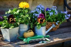 Zaczynasz przygodę z ogrodem? Podstawowe narzędzia do ogrodu!