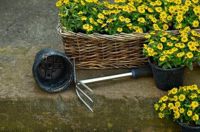 Grabie, łopatka i kwiaty