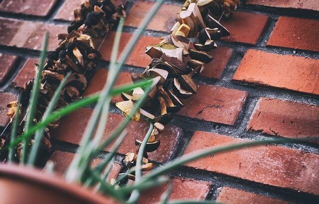 Suszące się na sznurku grzyby